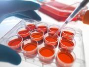 Primo Report trimestrale sull'attività di Ricerca del Dott. Riccardo Masetti
